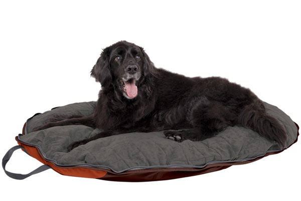 Cesar Millan Travel Dog Bed