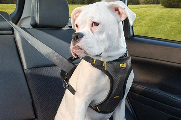 kurgo tru fit smart dog impact harness hero1