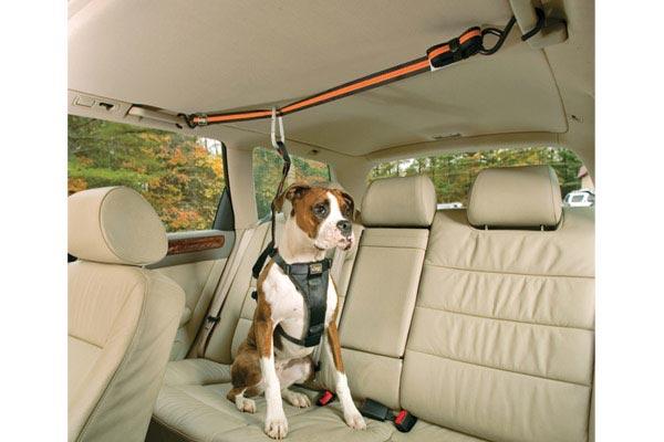 Kurgo Auto Zip Line Best Price On Dog Seat Belt Harness. Kurgo Auto Zip Line. Seat. Seat Belt Harness Zipper At Scoala.co
