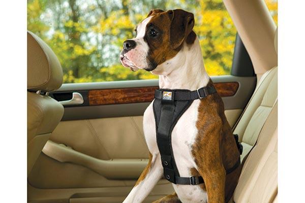 kurgo smart dog harness