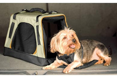 Lexus SC 430 Kurgo Wander Dog Carrier