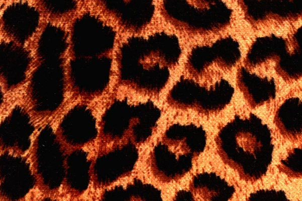 coverking velour animal print dash cover cheetah print