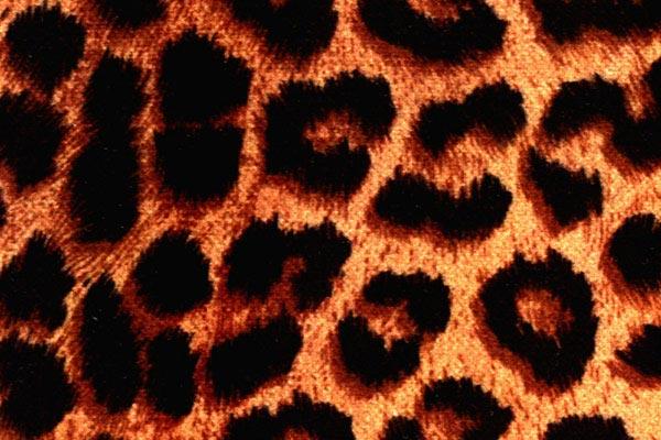 coverking velour animal print dash cover cheetah print