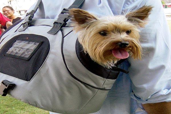 Motor Trend Universal Sport Bag Pet Carrier backpack