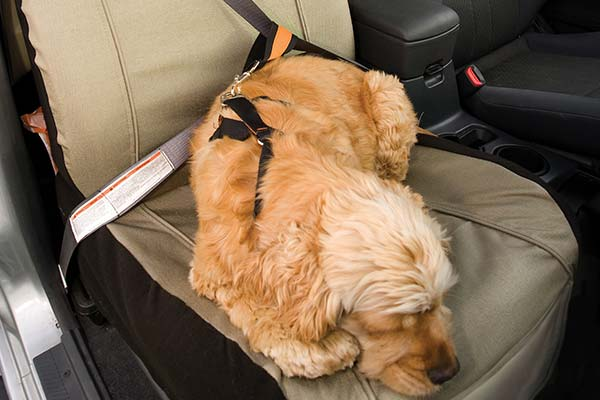 kurgo co pilot dog seat cover rel1 lifestyle1