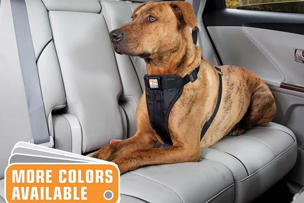 kurgo smart dog harness rel1 lifestyle