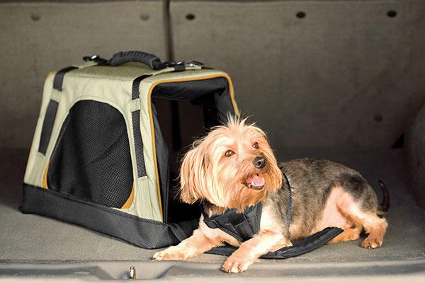 kurgo wander dog carrier dog lifestyle