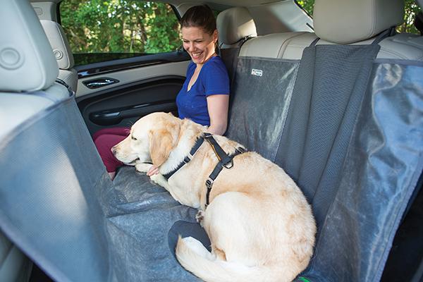 kurgo allagash dog hammock dog in car
