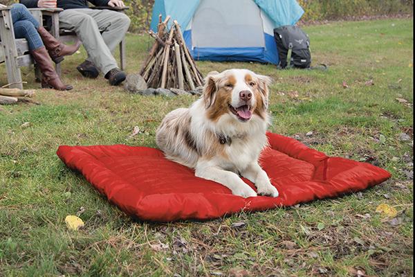 kurgo loft wander bed outside with dog