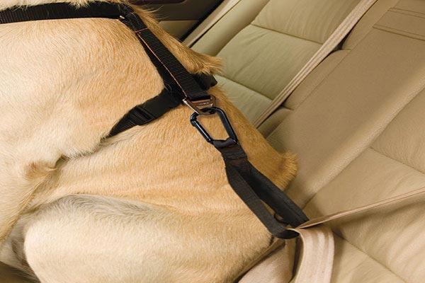 kurgo smart dog harness close up