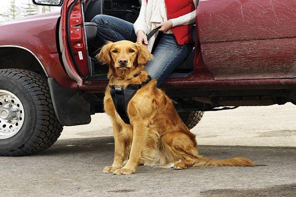kurgo smart dog harness truck