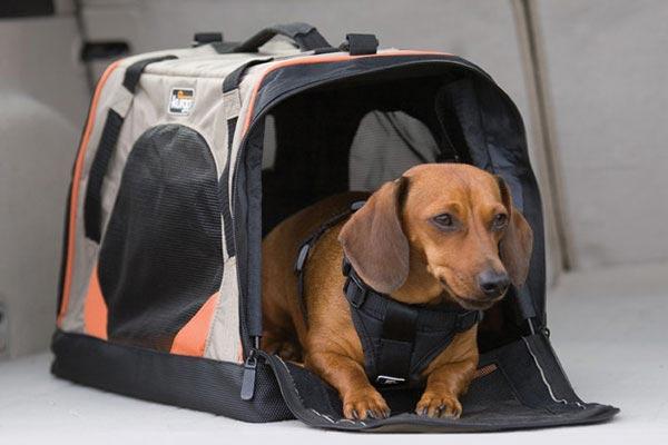 kurgo wander dog carrier related5