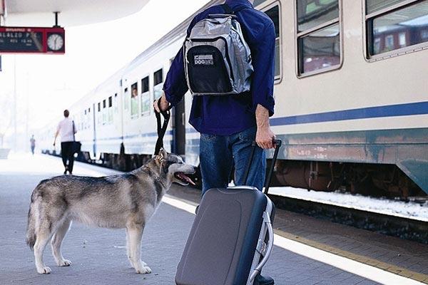 motor trend dog bag pet tent travel