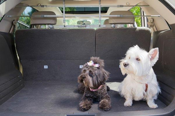 petego k9 keeper pet safety barrier back