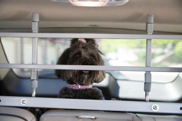 petego k9 keeper pet safety barrier brown dog