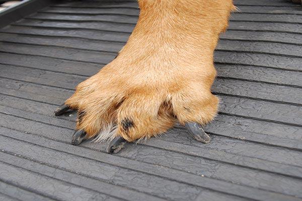 petstep folding pet ramp paw
