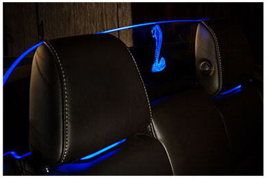 windrestrictor glow plate mustang coiled cobra blue sample