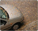 leaves and your car