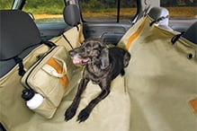 Pet Travel Reviews